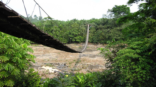 Monkey bridge - Korup Park - Cameroon