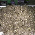 針葉樹バーク樹皮 乾燥前 2010.3.16(1)