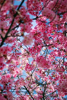 a tangled web of pink | by salazar62