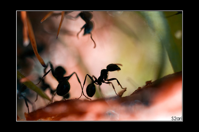 fourmis par Karim SAARI