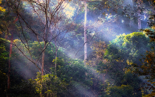 lumix rainforest panasonic jungle malaysia rol tarzan hutan jeram seremban toi naturesfinest kabus platinumphoto fz28 ishafizan sailsevenseas