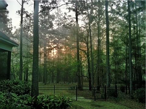 morning trees green fog sunrise