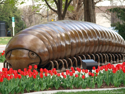 Tulips and Millipede