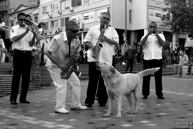 people dogs 2