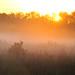 Prairie Meadow Fog by NaturalLight