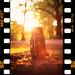 Film on Film by Edd Noble