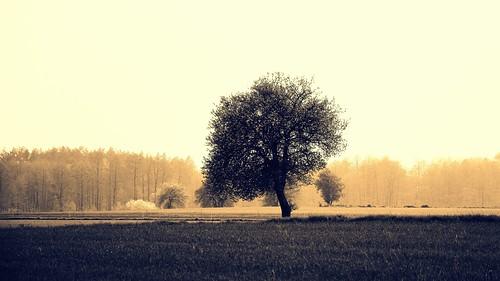 spring rain nature landscape view tree forest trees monochrome mist fog haze łódzkie lodzkie polska poland