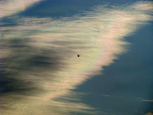 morning pink blue sky orange white mist portugal yellow tangerine clouds sunrise geotagged seagull sony peach lagoon ria darkclouds gaivota aveiro riadeaveiro rainbowcolours birefringence sonydsch9 ilustrarportugal ubichan geo:lat=40719176 geo:lon=8698608 cloudbirefringence