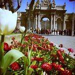 ドルマバフチェ mit Blumen