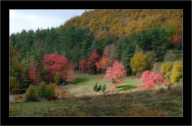 couleur d'automne coulans sur lison