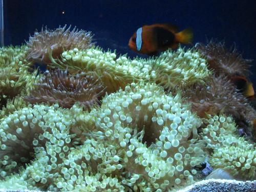 The Living Planet Aquarium in Salt Lake City   The Living ...