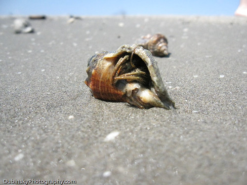 Hermit Crab - Grand Isle, Louisiana | by Louisiana Environmental Action Network(LEAN)
