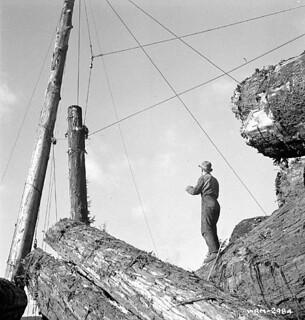 A chaser, on top of a cold deck of lumber, ready to unhook a new arrival dragged by cable, April 1943 / Un décrocheur, debout sur un dépôt de troncs d'arbres, prêt à décrocher un nouvel arrivage tiré par câble, avril 1943