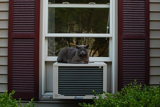 Gray cat on air conditioner | by pjrusello