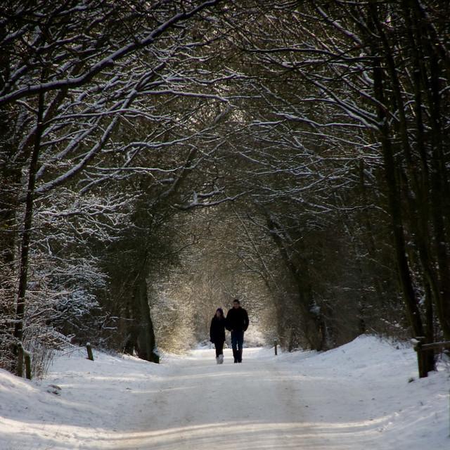 Light in winter 015