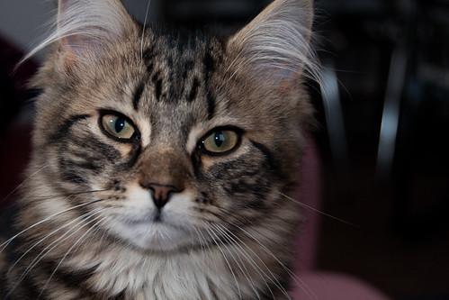 Kitten @ Stirchley, Birmingham | by timparkinson
