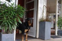 dog guarding door