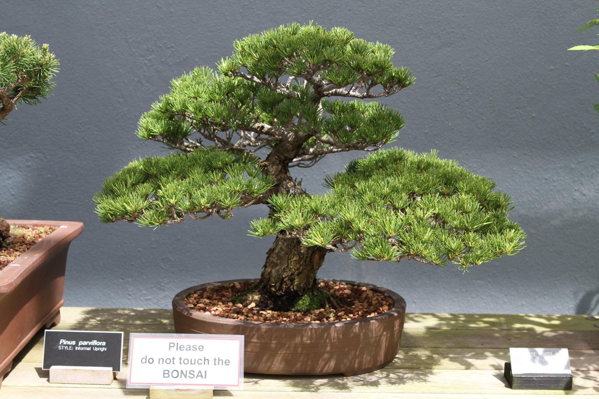Sakura Matsuri 159