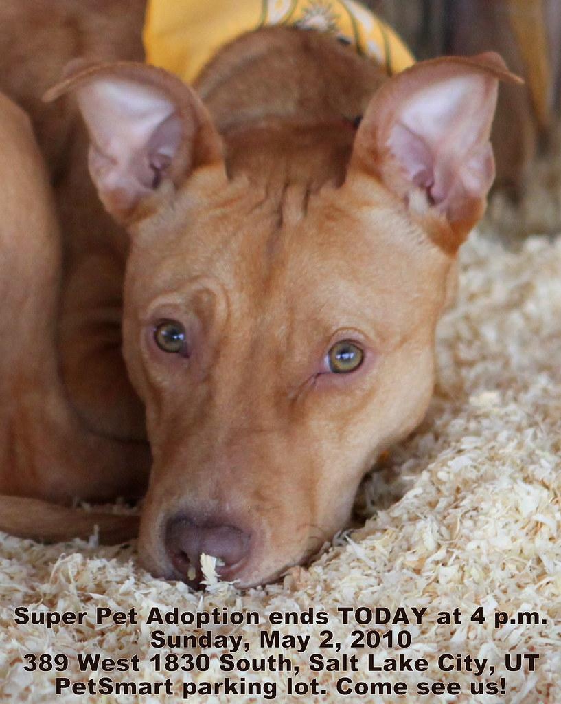 pet adoption