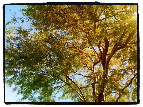 california ca blue tree green southerncalifornia morongo iphone wmhphotography