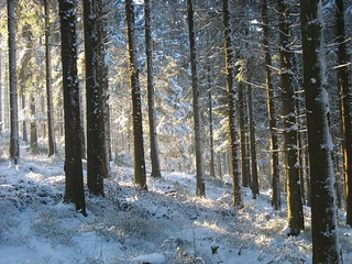 Snow Forest | by duncan_idaho_2007