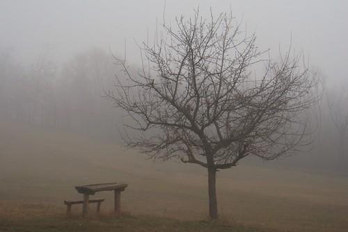 winter fog landscape macedonia february zima baretree picnictable skopje makedonija dimër peisazh shkupi shkup македонија maqedonia mjegull скопје паркшуматагазибаба gazibabaforestpark