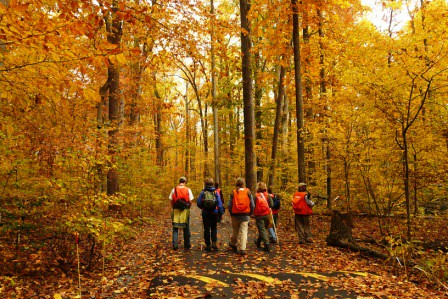 Wed, 11/05/2008 - 15:30 - SERC forest in the fall, November 2008. Credit: SERC