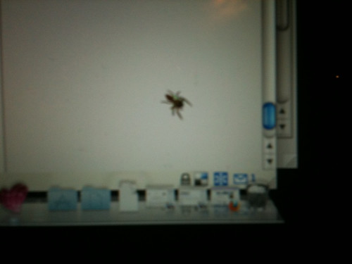 A visitor to my desktop