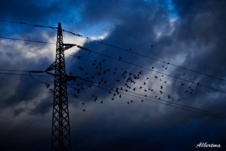 Pajaros en torre eléctrica | by albertma.