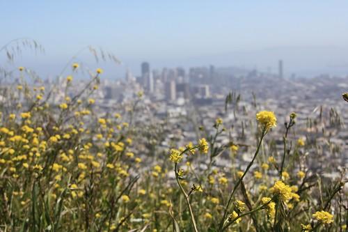 Twin Peaks View | by LeDaemon