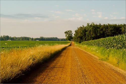 road trees raw farm lane fields joeldinda 1v1
