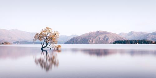 long exposure wanaka new zealand tree lone mountains lake water serene calm morning sunrise summer panorama