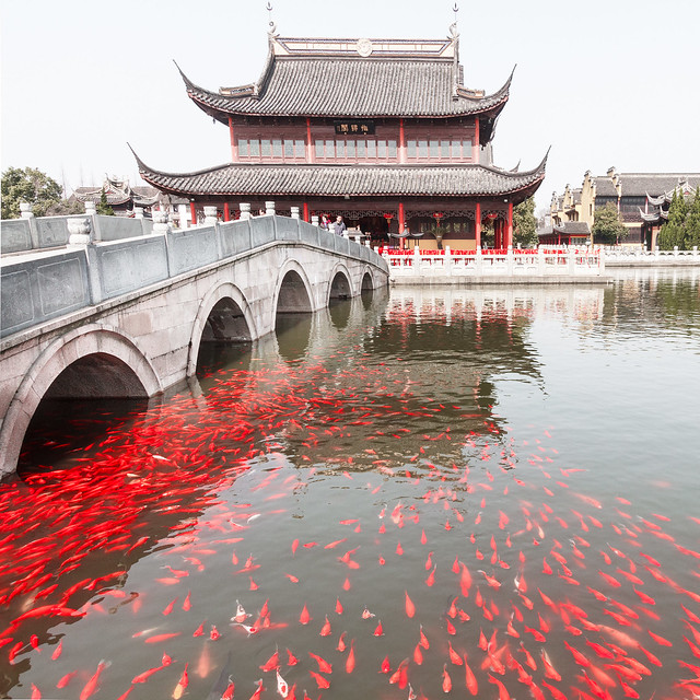 Zhouzhang Chengxu temple with its gold fishes.