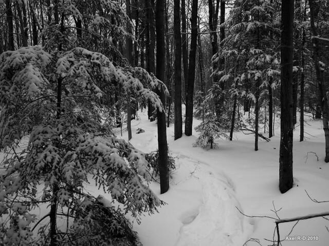 La forêt qui entoure Trois-Rivières