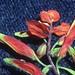 Castilleja albobarbata H.H. Iltis & G.L. Nesom