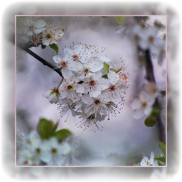 blossom time . . .