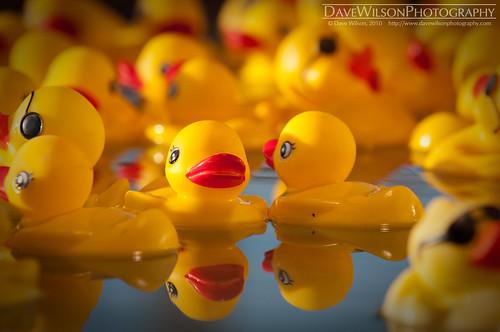 carnival reflection water austin duck texas artistic tx fair funfair rodeoaustin