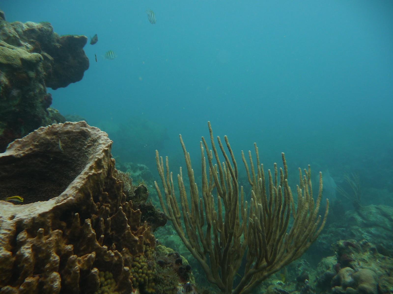 Das Karibische Meer (Forts.): Unterwasser