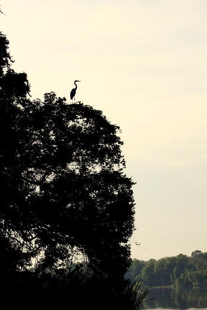 heron on bivens arm