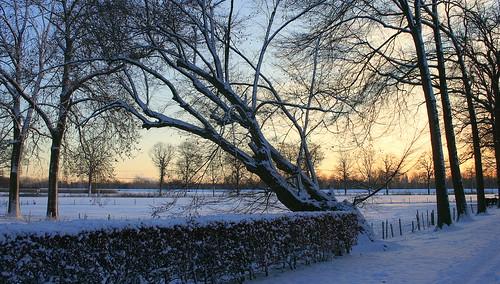 schnee winter snow netherlands sunrise sneeuw nederland horn limburg niederlande zonsopkomst limburgslandschap