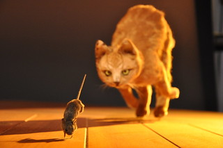 Cat and mouse chase | by Jeroen Moes