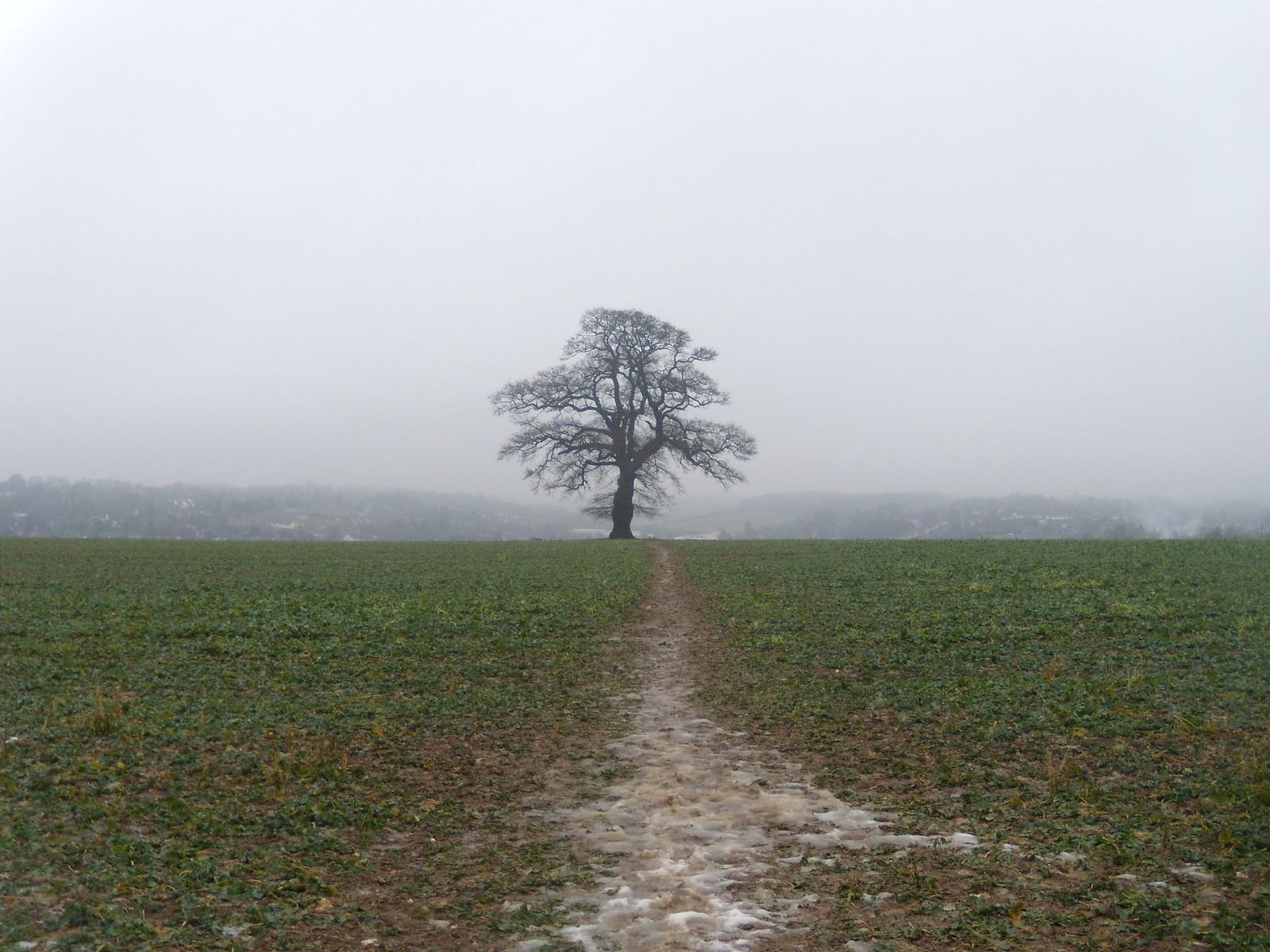 Tree over Chesham DSCN8678 Chorleywood to Chesham
