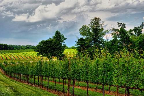 northcarolina childress winery vineyards hdr lexingtonnc jeanetterunyon chldressvineyards
