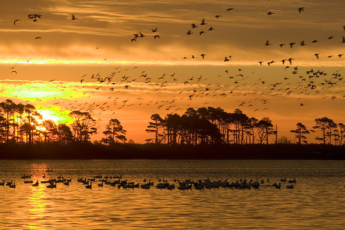 Photo of the Week - Sunrise at Chincoteague National Wildlife Refuge (VA) | by U. S. Fish and Wildlife Service - Northeast Region