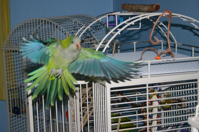 Beautiful Wings_0380