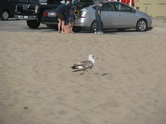 Seagull | by Taifighta