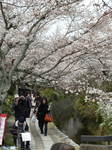 Kyoto blossoms | by kalleboo