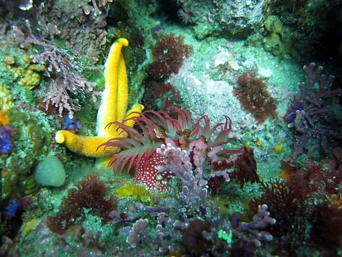 Monastery - Cheeto Starfish + Anemone