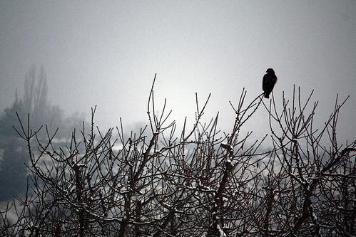 trees winter friends sunset snow birds hawk wa yakima orchards christmas2009