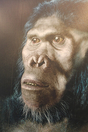 Homo habilis, Sterkfontein Caves exhibition | by flowcomm